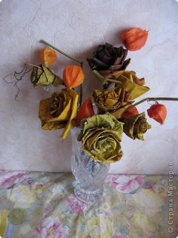 И вновь кленовые розы фото 2