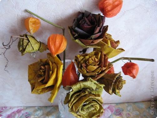 И вновь кленовые розы фото 1