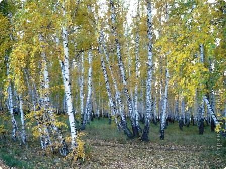 осенний лес- сказка!