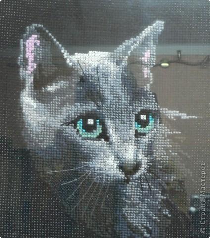 Вышивка крестом: Кошечка:)