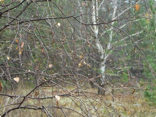 Таким был лес неделю назад. фото 16