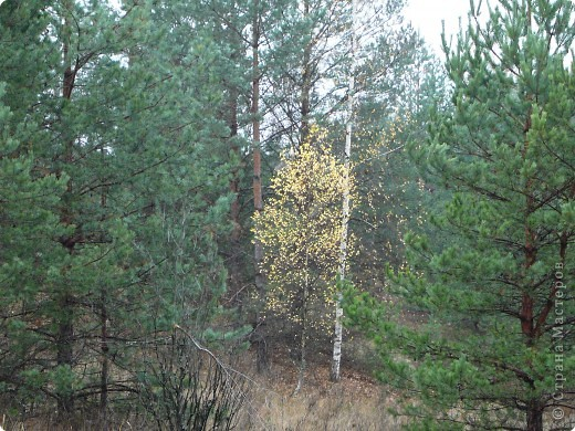 Таким был лес неделю назад. фото 3