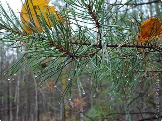 Таким был лес неделю назад. фото 17
