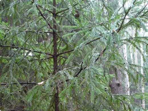 Таким был лес неделю назад. фото 18