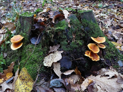 Таким был лес неделю назад. фото 7