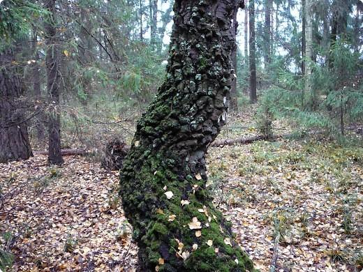 Таким был лес неделю назад. фото 8