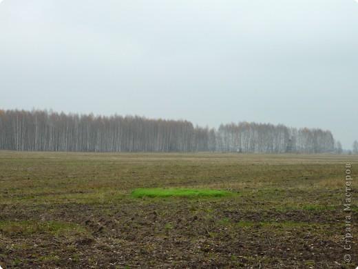 Таким был лес неделю назад. фото 2