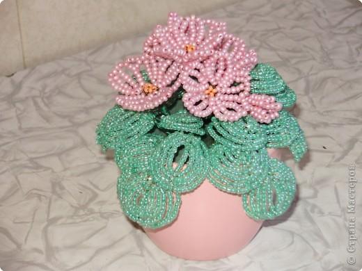 Розовая фиалка. фото 1