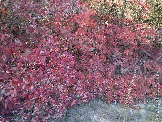 Осень, осень... фото 1