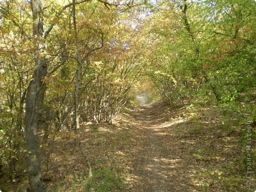 Осень, осень... фото 11