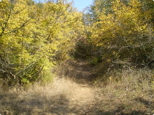 Осень, осень... фото 12