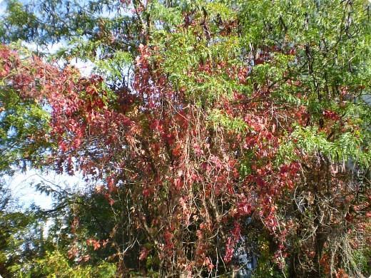 Осень, осень... фото 19