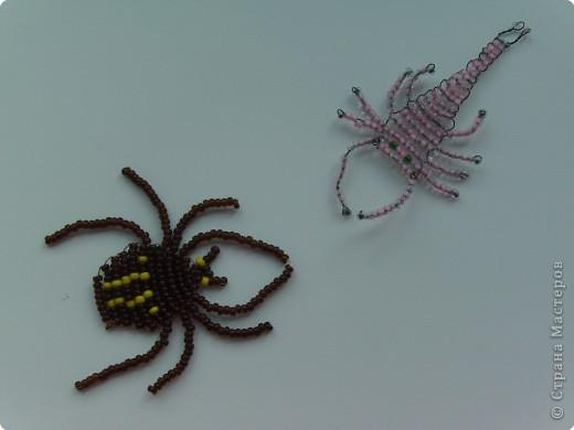 """""""Паук и скорпион"""" фото 1"""