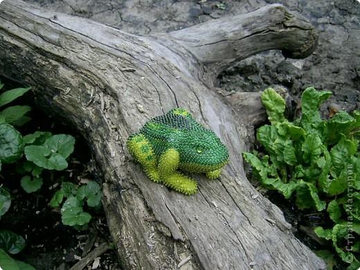 Царевна лягушка фото 1