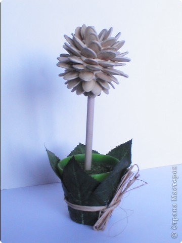 Из семян тыквы фото 1