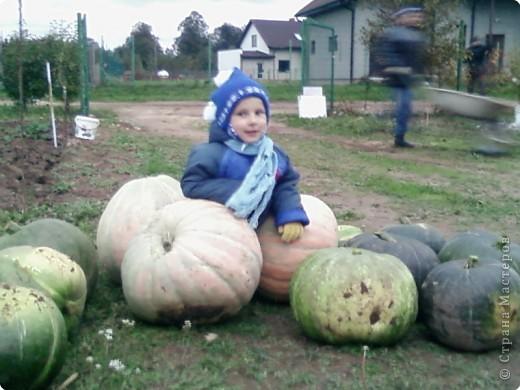 Тыква с огорода :)) фото 3