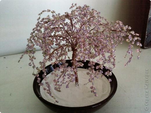 Фиолетовая сакура