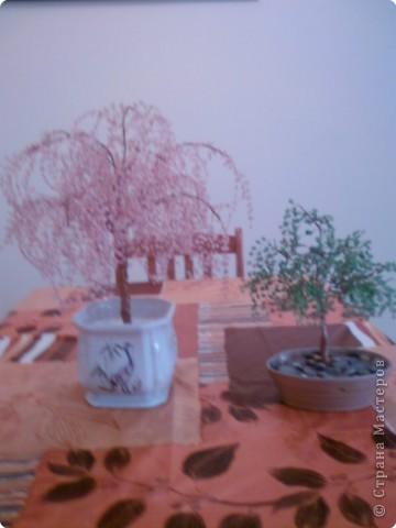 Сакура-гигант и яблонька
