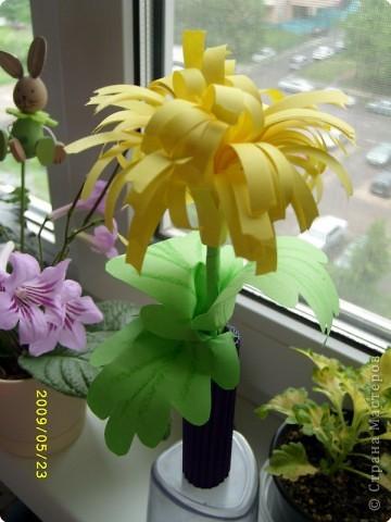 Желтая роза фото 8