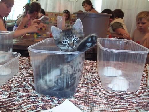 Детки раскрашивают гипсовые фигурки. А емкости , в которых эти самые фигурки хранятся очень понравились котенку Федьке. Кому простая коробочка, а кому  и кроватка. фото 1