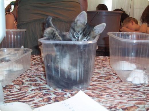 Детки раскрашивают гипсовые фигурки. А емкости , в которых эти самые фигурки хранятся очень понравились котенку Федьке. Кому простая коробочка, а кому  и кроватка. фото 2