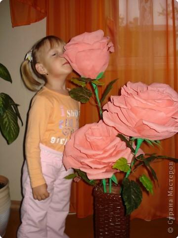 Увидела в инете такие большие розы,попробовала сделать фото 5