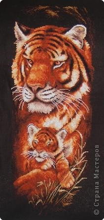 тиграца фото 1