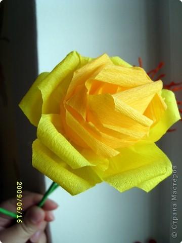 Желтая роза фото 1