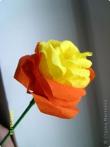 Желтая роза фото 3