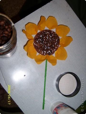 Желтая роза фото 6