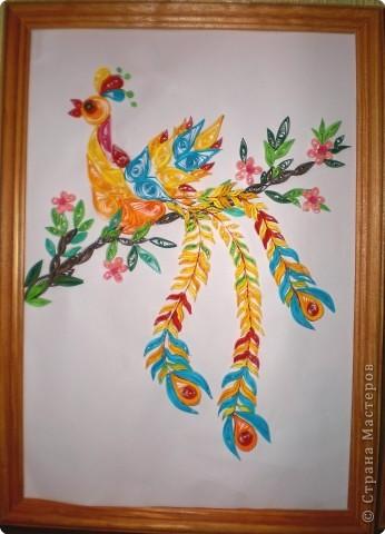 Райская птица фото 1