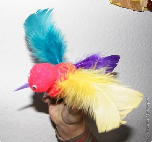 райская птица фото 2