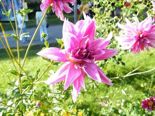 Цветочная выставка. Садовое шоу фото 19