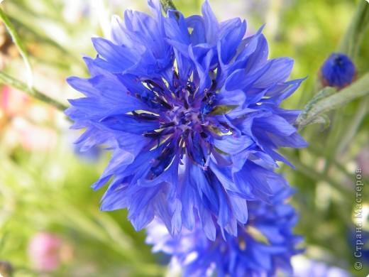 Цветочная выставка. Садовое шоу фото 36