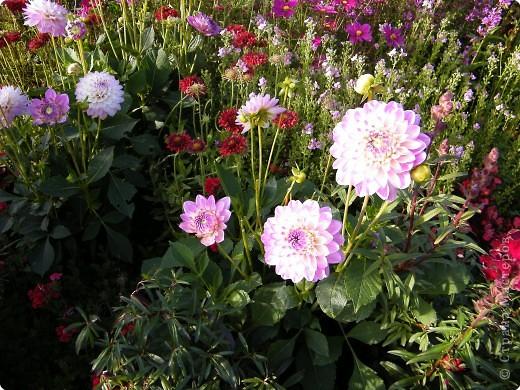 Цветочная выставка. Садовое шоу фото 41