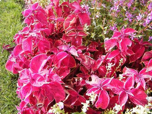 Цветочная выставка. Садовое шоу фото 42