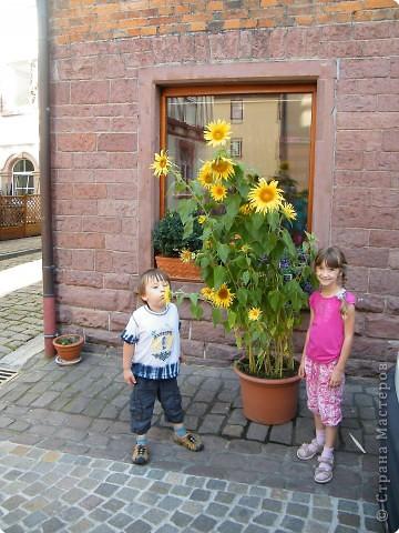 Замок Вертхайм фото 13