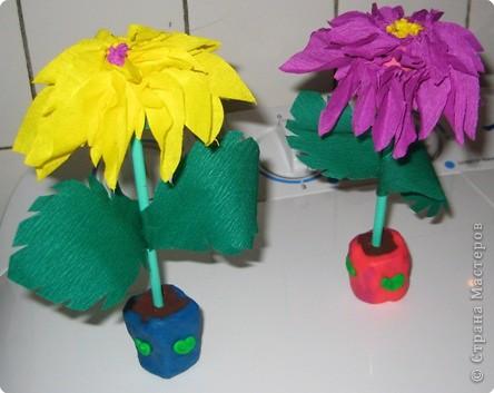 Цветы для воспитателей