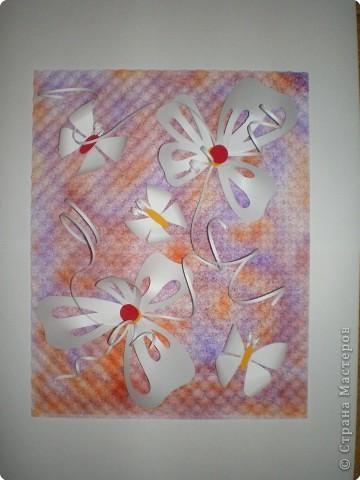 бабочки на поляне