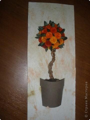 Вот и посадила свое апельсиновое деревце... фото 1