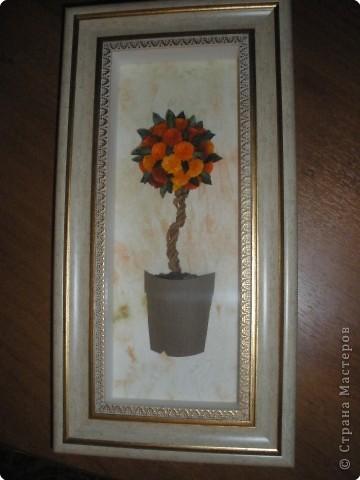 Вот и посадила свое апельсиновое деревце... фото 2