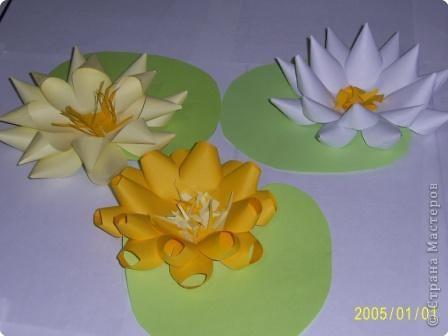 Для изготовления объёмных изделий водяной лилии необходим зеленый картон для листа, цветная бумага светлых тонов. фото 5