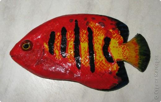 Тропические рыбки фото 4