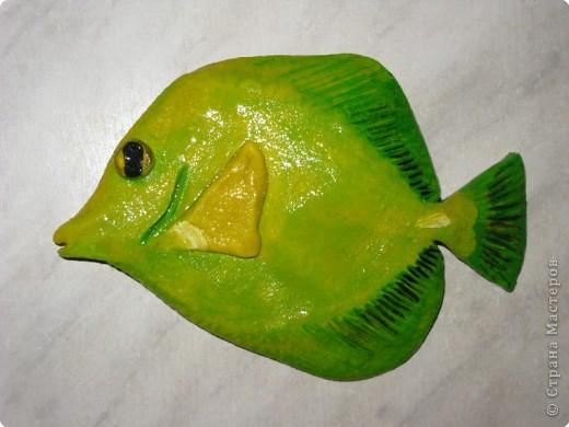 Тропические рыбки фото 1