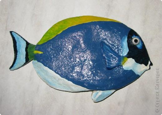 Тропические рыбки фото 3