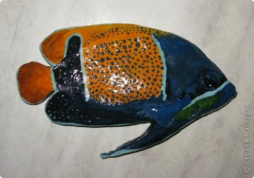 Тропические рыбки фото 2