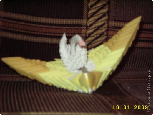циплёнок фото 3
