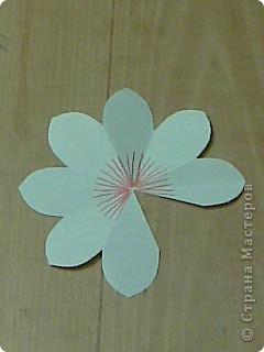 открытка -объемные цветы, фото 9