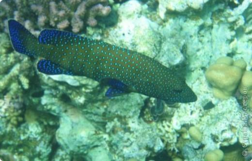 Коралловые рифы фото 4