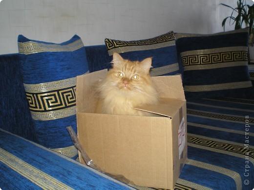 Знакомтесь. Это наш Бася. Самый главный в доме. Одним словом - ХОЗЯИН! фото 2